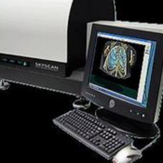 动物Micro-CT检测