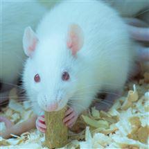 白内障动物模型