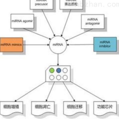 miRNA inhibitor技术服务
