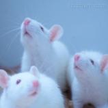 肾纤维化模型实验检测