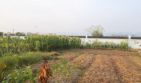 农业农村部:要像保护大熊猫一样保护耕地,守住18亿亩耕地红线