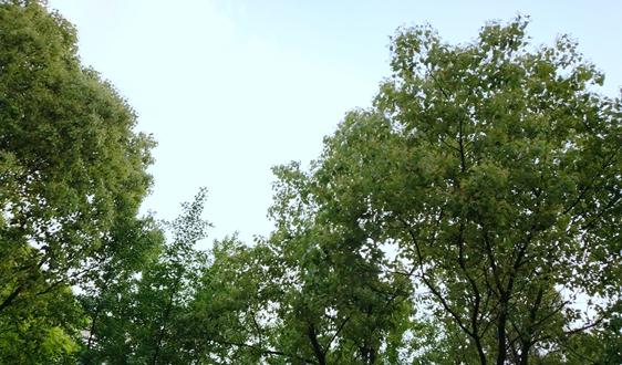 2021年江西省生态环境保护工作会议召开