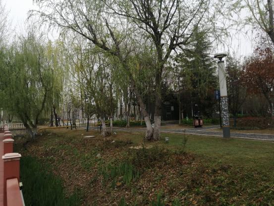 江苏省滨海县城管局着力打造洁净生态城市公园环境