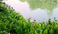 福建省农村生活污水提升治理五年行动计划(2021—2025年)