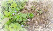《安徽省建设用地土壤污染风险管控和修复名录》已更新