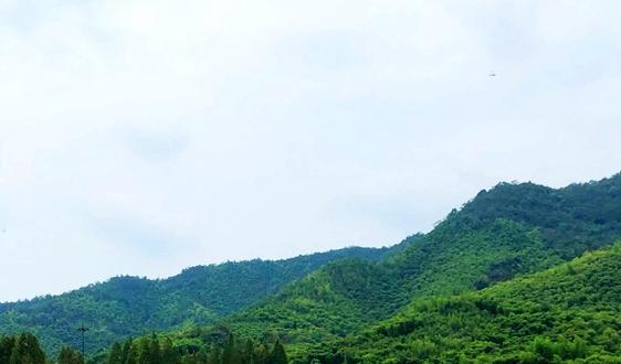 《黃山環保公約之歌》發布  風景區環保工作新示范
